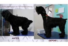 Centro Escola de Banho e Tosa Goiânia - ProfissionAu! Pet Goiânia Goiás Estado