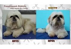 Escola de Banho e Tosa Goiânia - ProfissionAu! Pet Brasil Foto