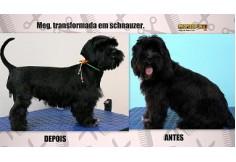 Foto Centro Escola de Banho e Tosa Goiânia - ProfissionAu! Pet Goiânia